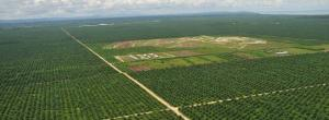 TBI: green as a palm-oil plantation