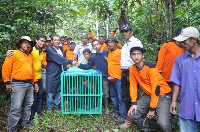 Teladan Prima tangkap orangutan