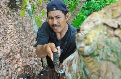 Kalimantan.jpg